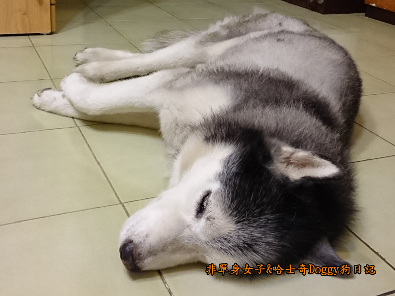 Doggy颱風05