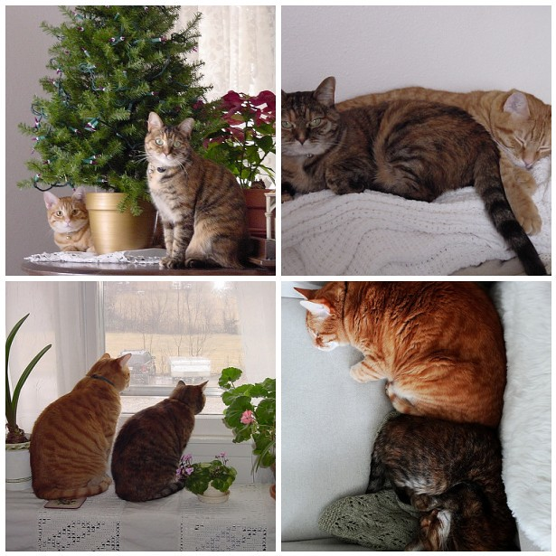 Kitty Companions