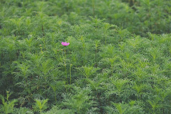 Hama-rikyu-Gardens-7