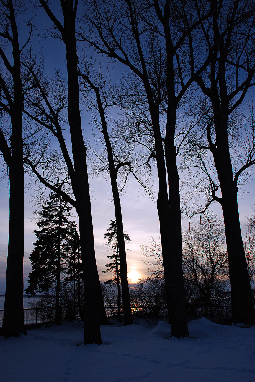 5 trees at sunset