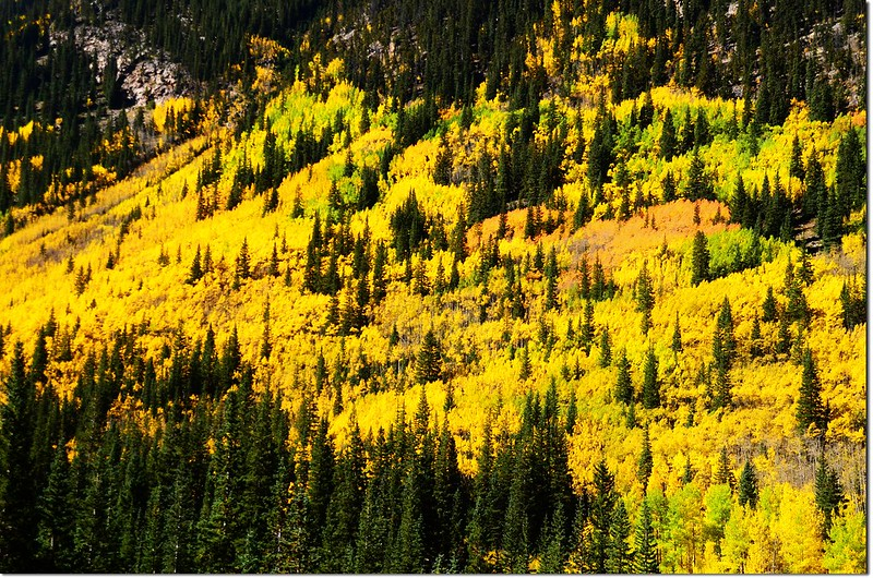 Fall colors at Guanella Pass, Colorado (15)