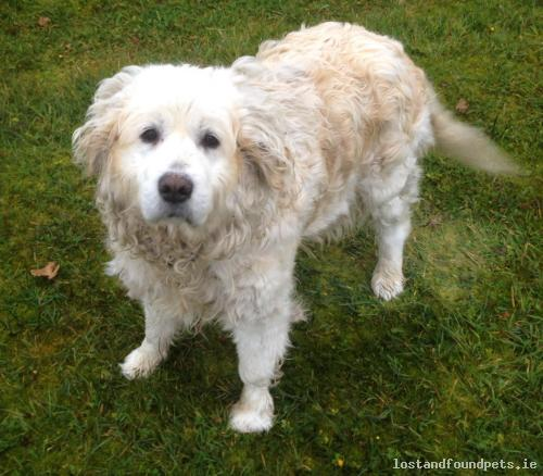 Sun, Oct 18th, 2015 Found Male Dog - Ryehill Road, Galway