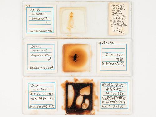 Old microscope slides