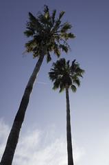 Palms @ Malibu | 151017-0024697-jikatu