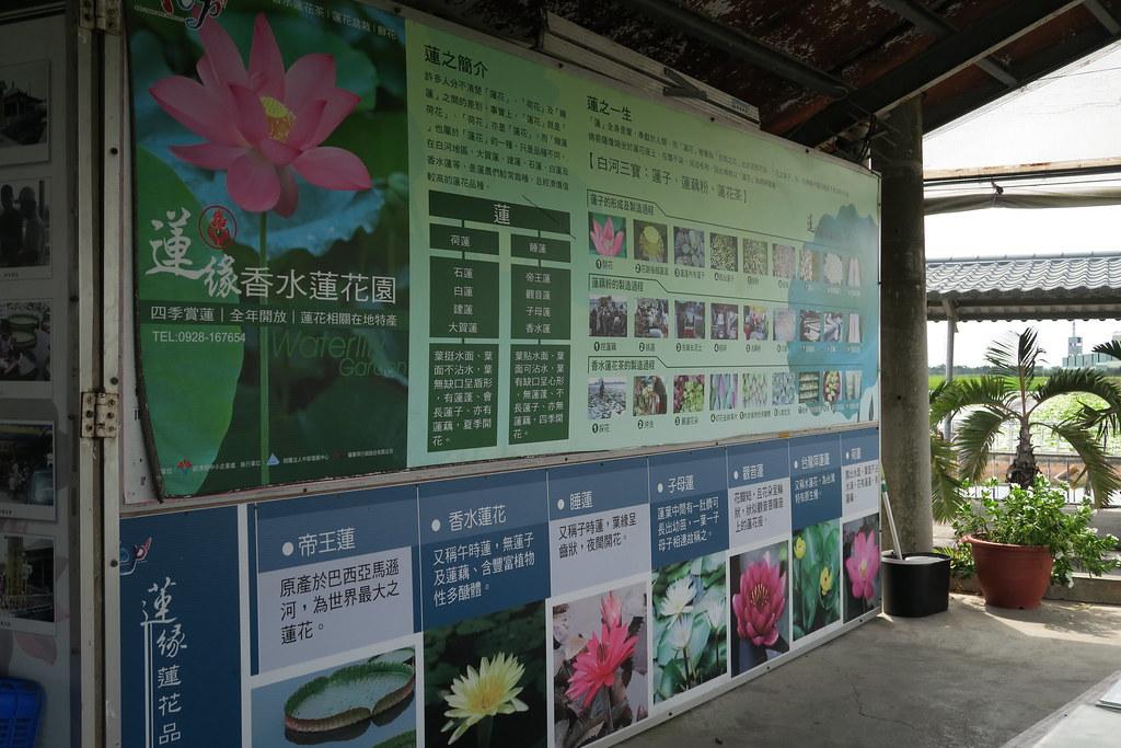 台南市白河區蓮緣香水蓮花園 (67)