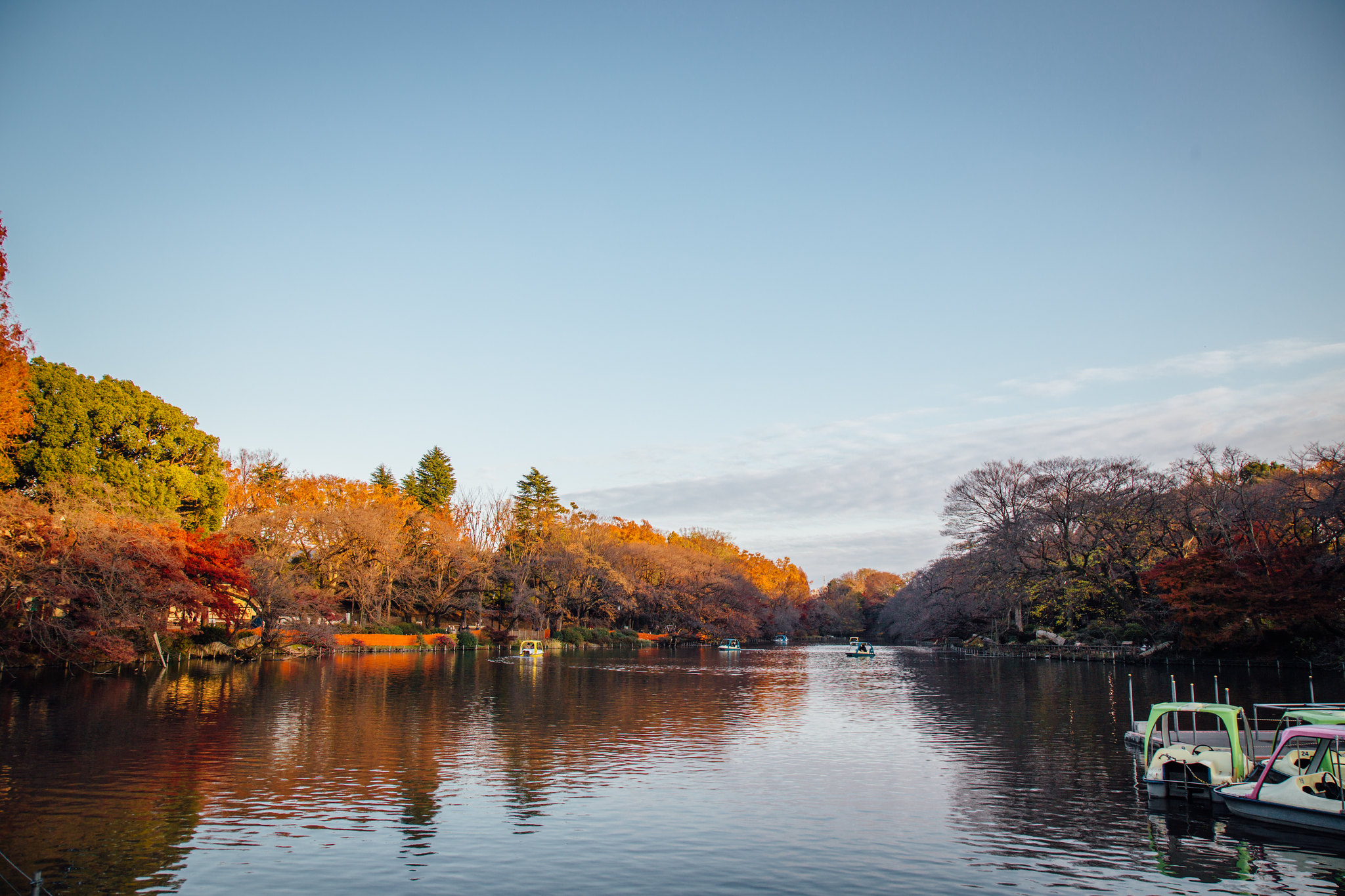 2015-12-08 井の頭公園 001-10