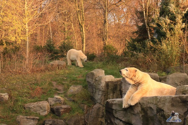 Zoo Hannover 30.11.2015  0229