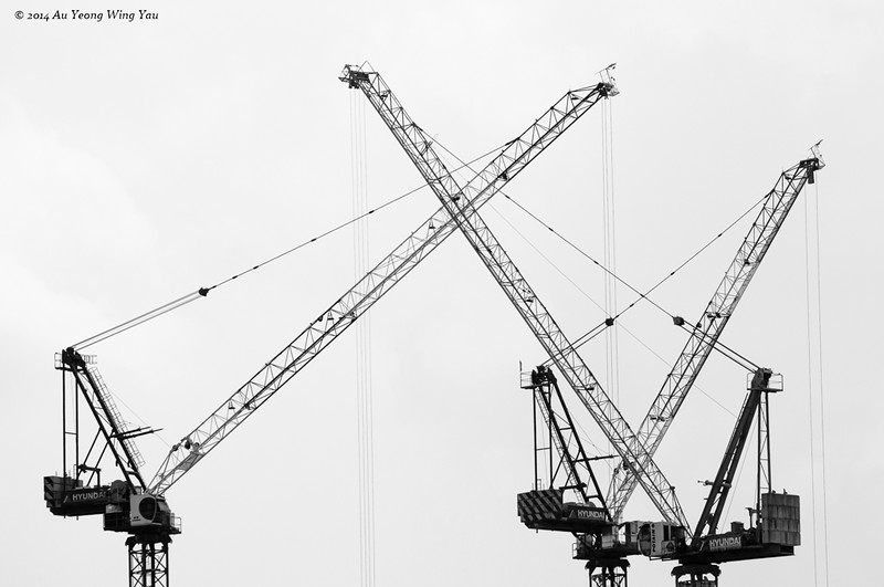Cranes Silhouettes Symphony
