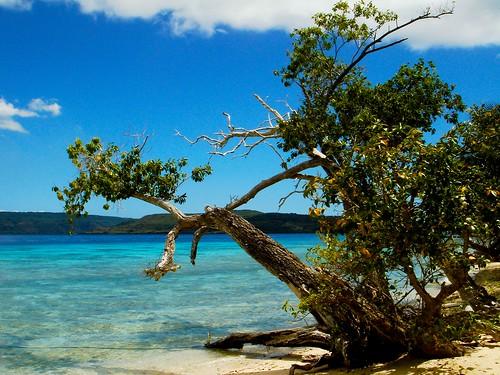 trees island sea environments water biodiversity