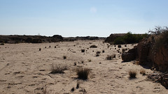 DSC07013 - NAMIBIA 2013  Swakop