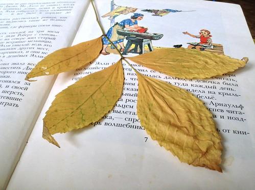 4. Засушить листья в книге