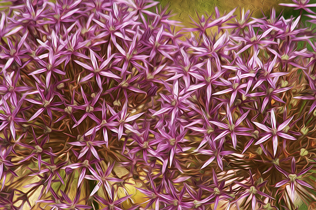 flores de allium