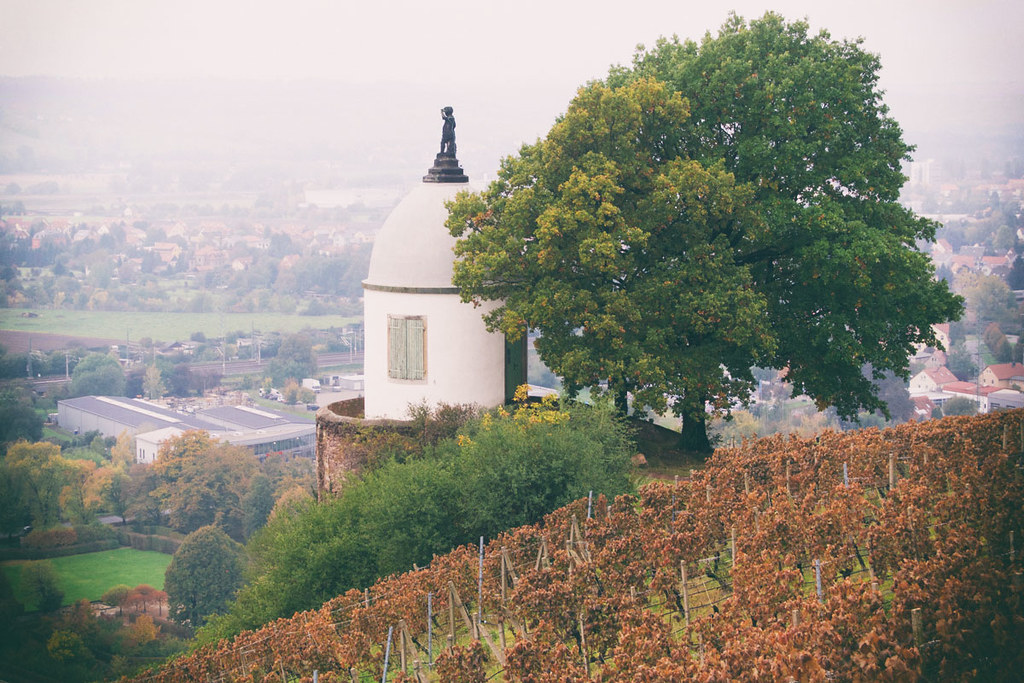 Auf dem Weinwanderweg