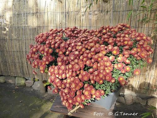bonsaigarten Ferch Herbst 2015