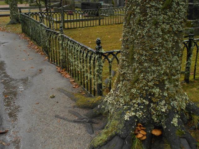 Jäkälien invaasio ja sieniä, 8.11.2015 Hämeenlinna Ahveniston hautausmaa