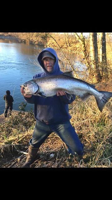 salmon on the Kilchis River