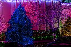 2016 National LDS Temple Christmas Lighting _7