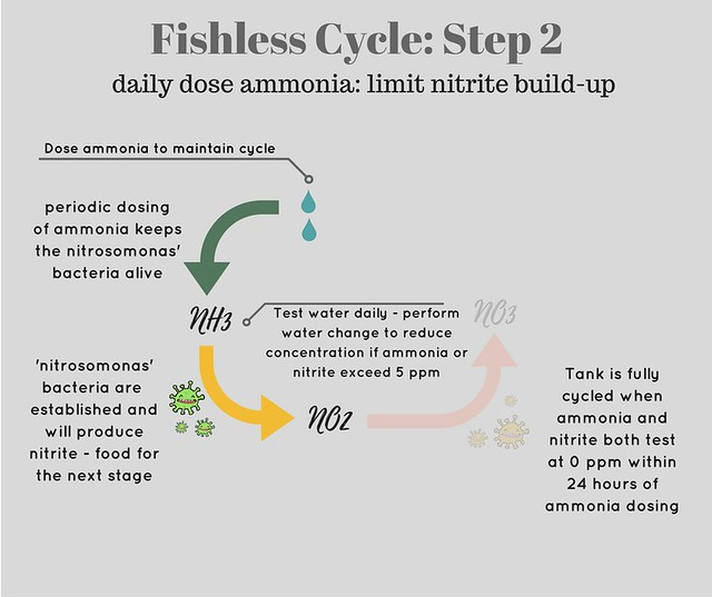 diagram showing step two of fishless cycle - testing for nitrite and nitrate
