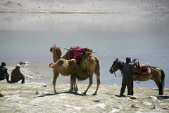 Kyrgyz Men and Livestock Karakul Lake Muztagh Ata Xinjiang Uyghur Autonomous Region of China