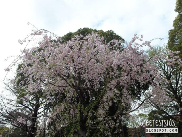 japan tokyo trip ueno park 26