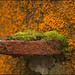 Moss, lichens and rust by catb -