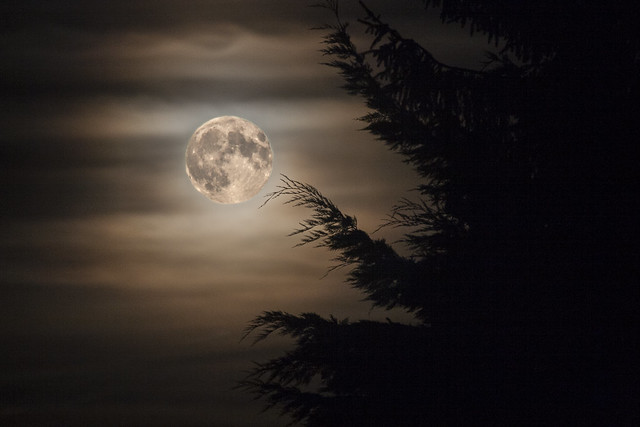 Tom Webb - Super Moon - (Explore)