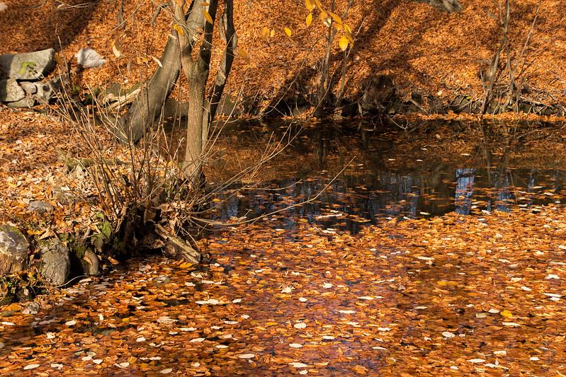 Herbst die letzten Blätter