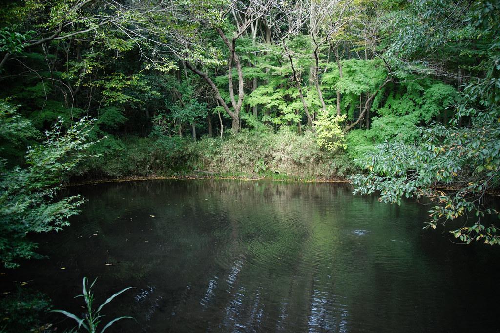 2015-11-11 野川公園 001
