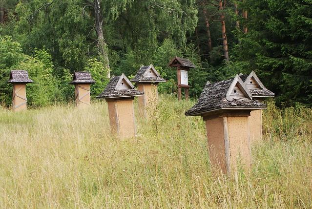 Ruches dans un parc des Suwalki en Pologne.