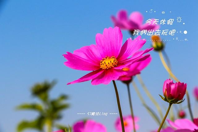 IMG_2770-25