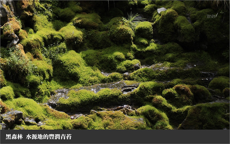 水源地的豐潤青苔