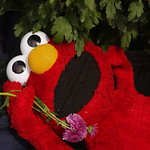 Elmo will tempt you . . .