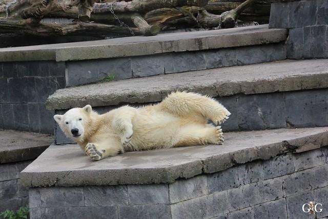Zoo Rostock 19.09.2015103