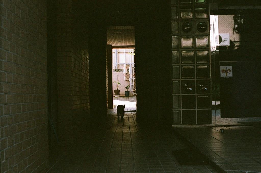 洗馬橋 熊本 Kumamoto 2015/09/06 但那時候好像才下午三點半,我在這個時間回到住的地方休息,因為今天是最後一天在熊本。  Nikon FM2 / 50mm AGFA VISTAPlus ISO400 Photo by Toomore