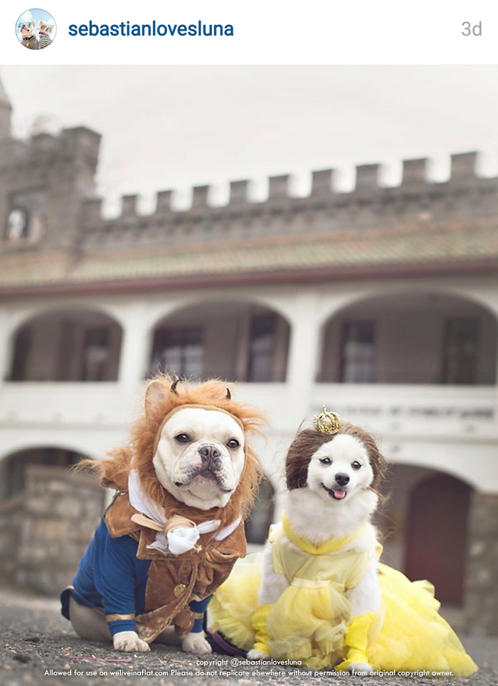 Boxer Dog Halloween Costume