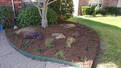 backyard, shrub, garden, soil, grass, yard, mulch, landscaping, lawn, walkway,