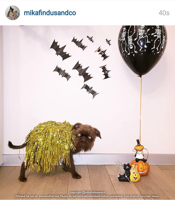 lady gaga dog halloween costume