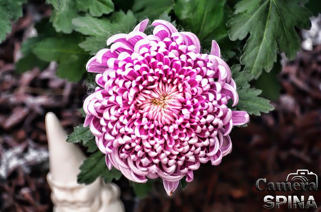 Flor 039