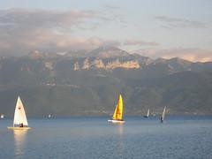 Sails on Lac Léman