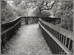 leaf-strewn bridge