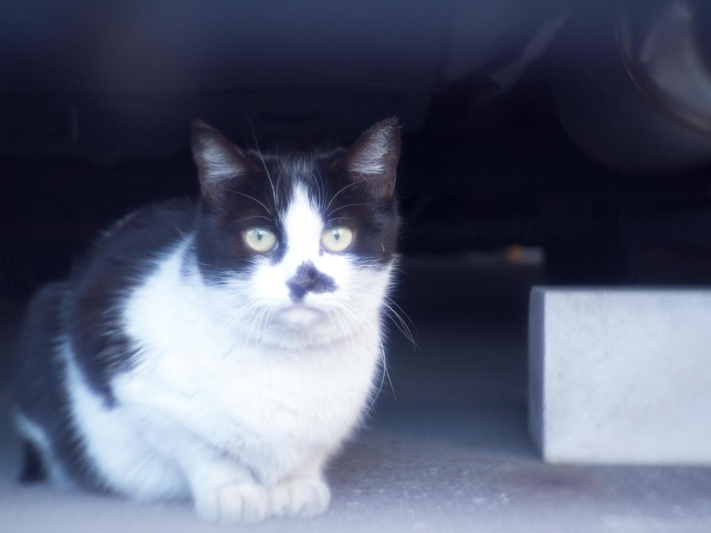 Stray cat f/1.1