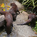 River Otters by Mark Harris photography