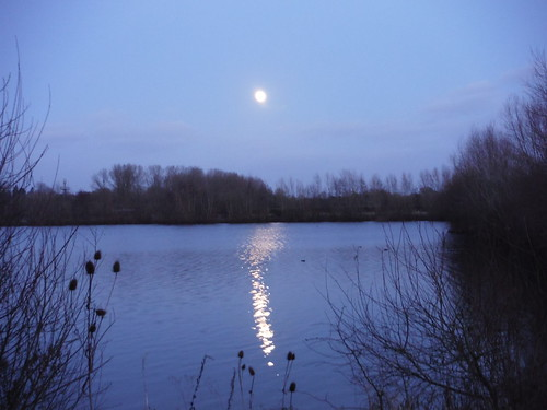 The Moon is Up, Lake in Woolhampton