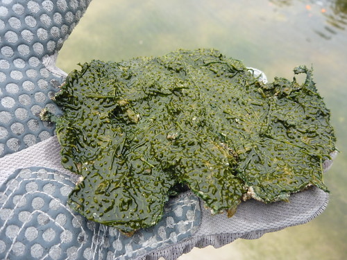 Hot Lake Microbial Mat