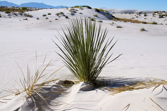 White Sands National Monument, October 13, 2011