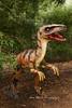 Raptor roaming at the Canberra Botanical Gardens
