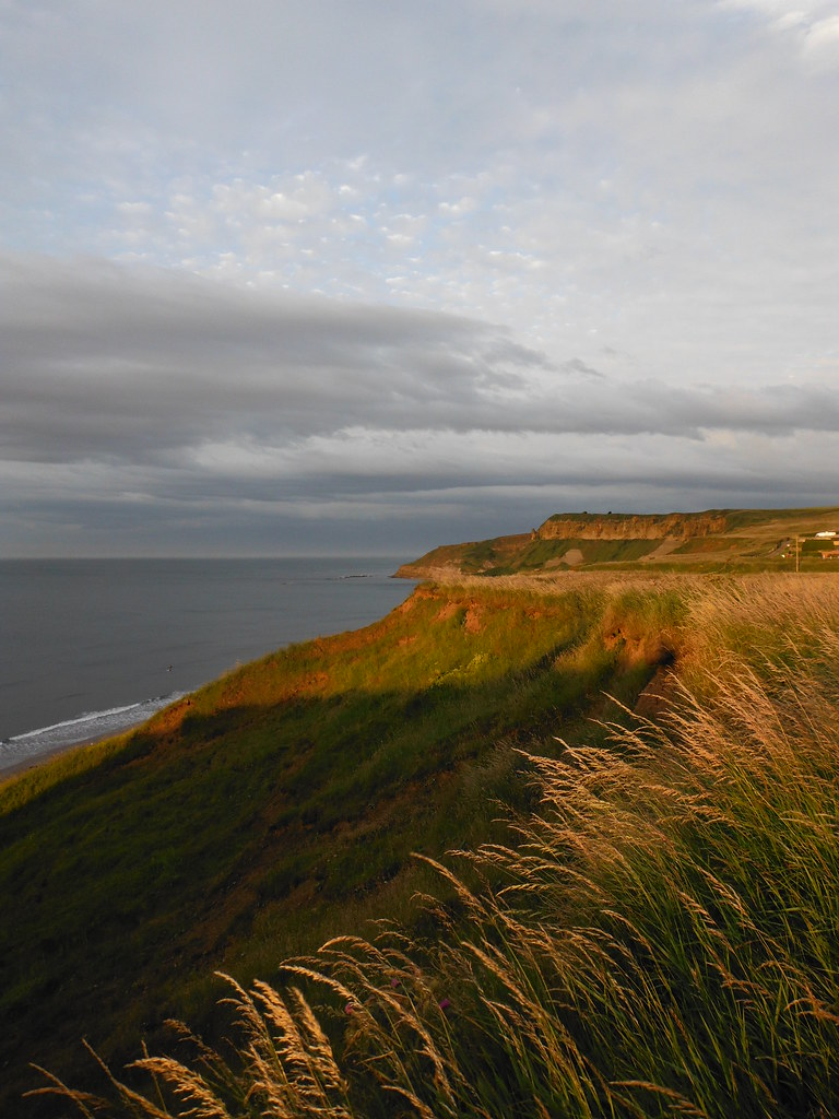 Cayton Bay Clifftops 2