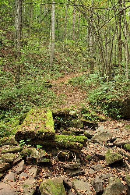 20150829_New_River_Gorge_012