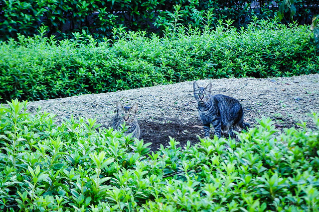 Today's Cat@2015-09-28