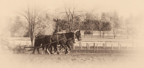 horse ontario field working farmer plow mennonite waterlooregion croshill
